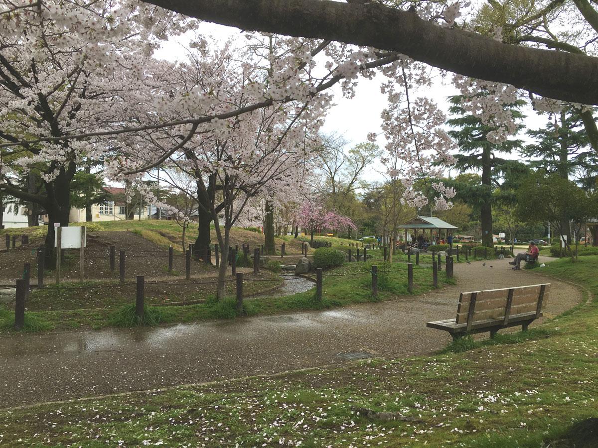 二条公園の桜